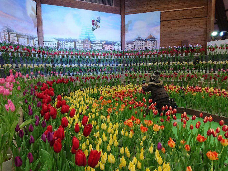 安曇野公園の花フェス